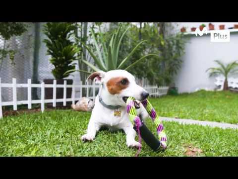 Patas y garras - Mascotas en el embarazo