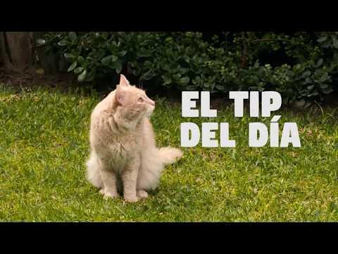 Patas y garras - Tip del día - Carpa para tu gato