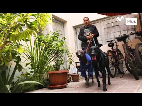Patas y Garras - Perros Peruanos