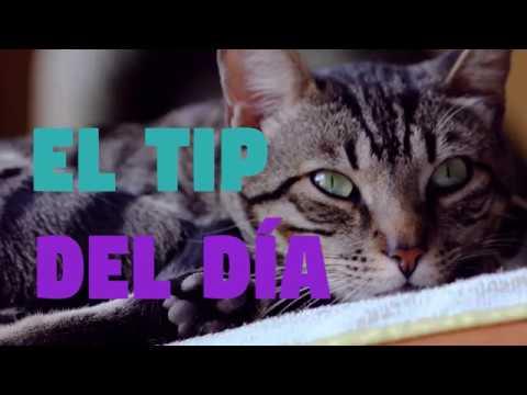 Patas y Garras - El tip del día - Cómo bañar a tu gato