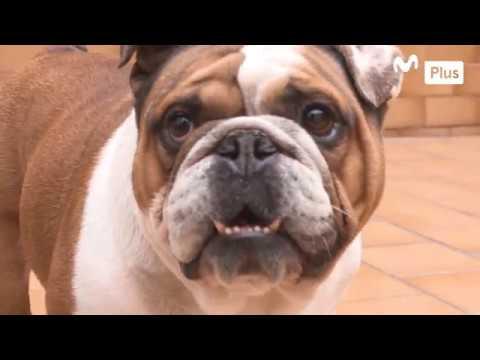 Patas y garras - Cómo me deshago de las pulgas de mi mascota