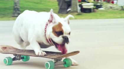 Skaters - Promo